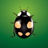 Black ladybug on green background Royalty Free Stock Image