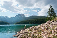Black lake . National Park in Montenegro Stock Images