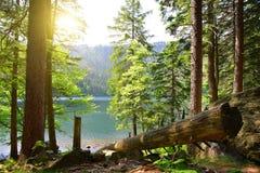 Black lake in the National park Sumava, Czech Republic. Stock Image