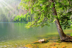 Black lake in the National park Sumava, Czech Republic. Royalty Free Stock Photography