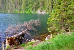 Black lake in the National park Sumava, Czech Republic. Stock Photo
