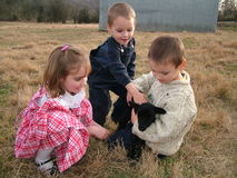 Black lamb and children. Children and black lamb in a farm pasture, petting and holding it Stock Photos