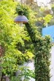 Black lamp hanging green tree Stock Image
