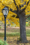 Black lamp post and yellow trees on Central Park, New York. Photo shot from inside Central Park in New York Royalty Free Stock Photo
