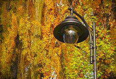Black lantern in the autumn park. royalty free stock images