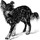 Black lapdog. Vector sketch of a little black dog vector illustration