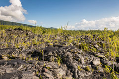 Black lava field and vegetation Stock Images