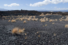 Black Lava Landscape with Grass, Kona, Hawaii Royalty Free Stock Photos
