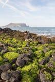 Black lava rocks covered with seaweed on Jeju Island Stock Photos