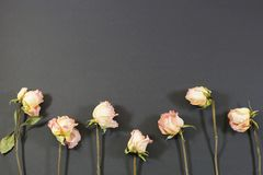 Black lawn of pink roses Royalty Free Stock Photo