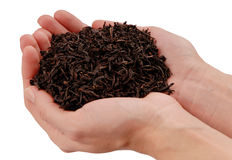 Black leaf tea in hands, handful of dried tea royalty free stock photography