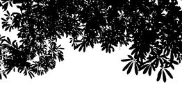 Black leaf tree Silhouette isolate on white background Royalty Free Stock Photos