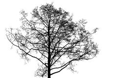 Black leafless tree photo silhouette. On white background stock photography