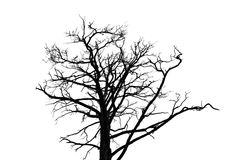 Black leafless tree silhouette isolated on white Stock Photography