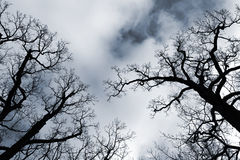 Black leafless trees silhouettes over blue sky Stock Photo