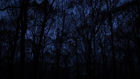 Black leafless trees silhouettes over dark blue sky. Gloomy and stock photos