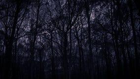 Black leafless trees silhouettes over dark purple sky. Gloomy an. D dark monochrome background royalty free stock image