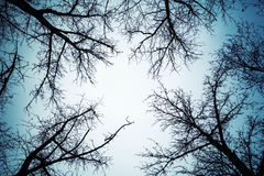 Black leafless trees silhouettes over dark sky. Black leafless trees silhouettes over dark blue sky royalty free stock photography