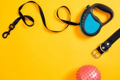 Black leather dog collar, pink ball and blue leash attached on yellow background. Top view Royalty Free Stock Image