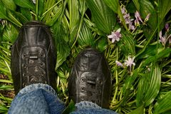 Black leather shoes on their feet stand on green leaves and flowers Royalty Free Stock Photography