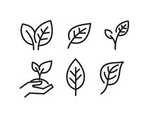 Black leaves icons. Vector black leaves icon on white background Stock Image