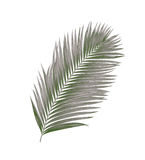 Black leaves of palm tree Stock Photography