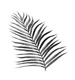 Black leaves of palm tree Royalty Free Stock Photography