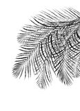 Black leaves of palm tree stock photo