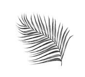 Black leaves of palm tree royalty free stock photo