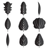 Black leaves set icon vector design illustration. Black leaves set icon with isolated white background Stock Image