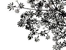Black leaves. On white background Stock Image