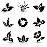 Black Leaves  on white Royalty Free Stock Photos