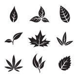 Black Leaves  on white Stock Photo