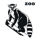 Black lemur mascot Stock Image