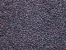 Black lentils Stock Photo