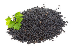 Black lentils Stock Photography