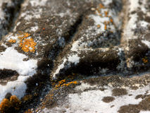 Black Lichen. On a Rock royalty free stock photography