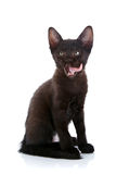 The black licking lips kitten sits on a white background. Royalty Free Stock Photos
