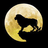 Black lion in front of the moon Stock Photo