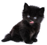Black little kitten licking