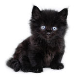 Black little kitten sitting down Royalty Free Stock Photos
