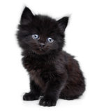 Black little kitten sitting down Royalty Free Stock Photos