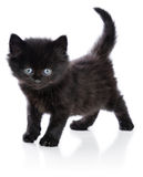 Black little kitten standing up Royalty Free Stock Photos