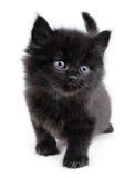Black little kitten walking Royalty Free Stock Images
