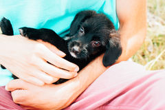 Black little puppy on hands. Little black puppy on hands royalty free stock images