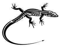 Black lizard with natural Stock Photos