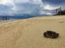 Black local Crab on the beach, koh munknok, Thailand royalty free stock photos