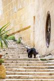 A black long-haired cat on limestone exterior steps stock images
