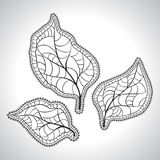 Black macro leaf natural isolated. Vector Stock Image