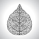 Black macro leaf natural isolated. Vector Royalty Free Stock Photos